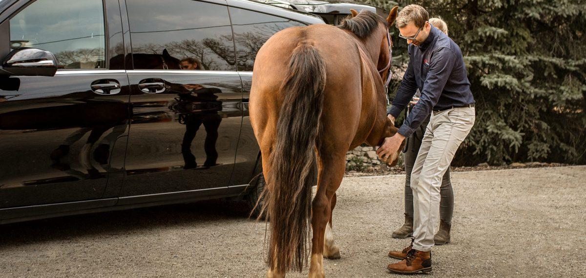 TS Pferdepraxis